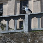 Gull enjoying the view on Alcatraz
